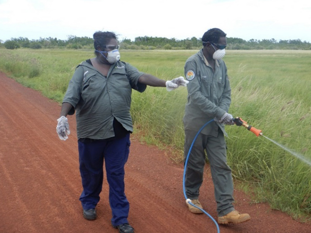 Rangers undertaking weed control with a spray unit at Dhabla on the barge landing road.