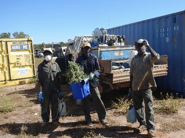 Donydji rangers spraying and hand-pulling Caltrop (Tribulus cistoides/terrestris). Caltrop rapidly invades denuded areas and the seed carrying burrs are spread by animals and vehicles.